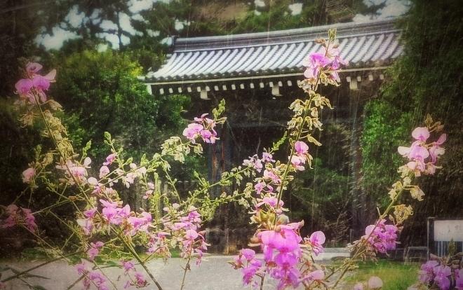 京都御苑 萩 清和院御門.jpg